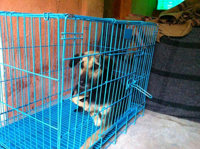 Animal Rescue Project - Jan-Feb 2016 (18)